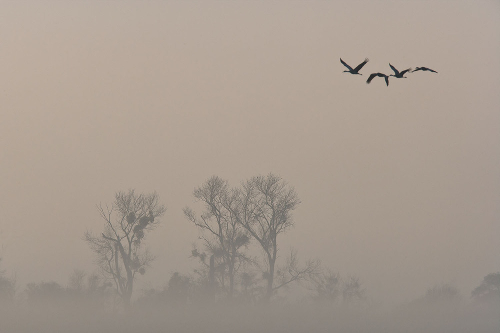 Foggy Flight