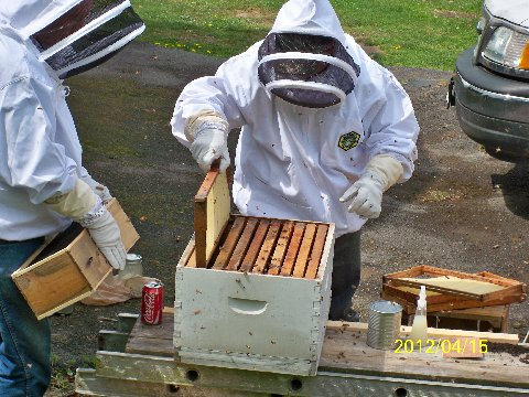 inspecting the hive 2.JPG