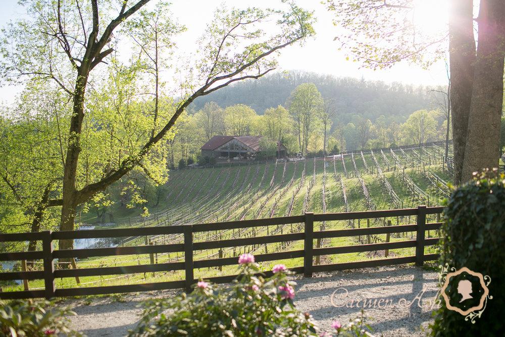 0122-Rodgers-Wedding-Carmen-Ash-vineyard.jpg