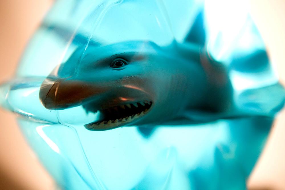 Not Shark