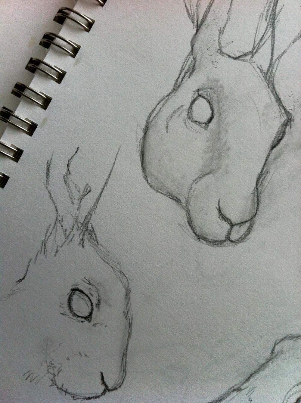 rabbitsketch.jpg
