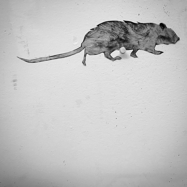 This guy may make it into a painting… #homage to the #nyc #street #rat #relic #dailyrelic365_filizemma #day50