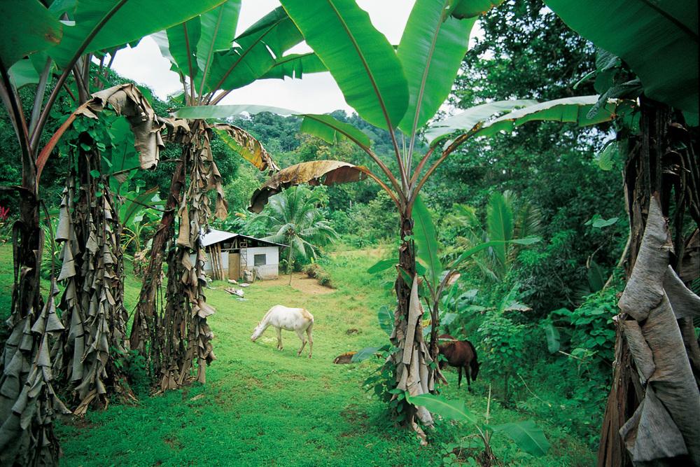 Costa_Rica_Osa_Peninsula.jpg