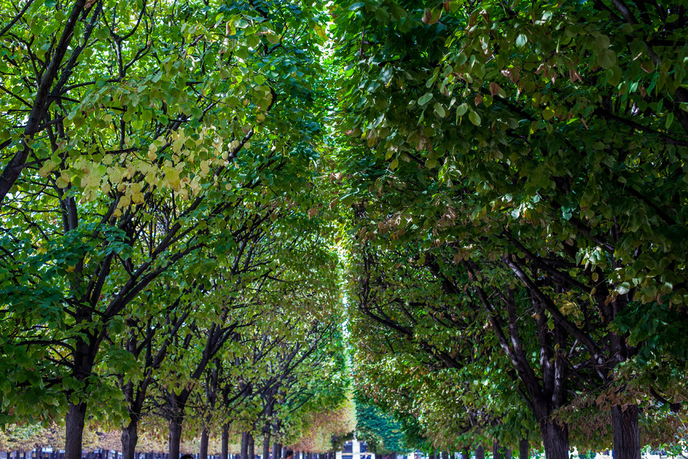 Gardens_Paris_France.jpg
