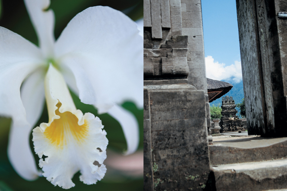 Bali_Temple_Orchid.jpg