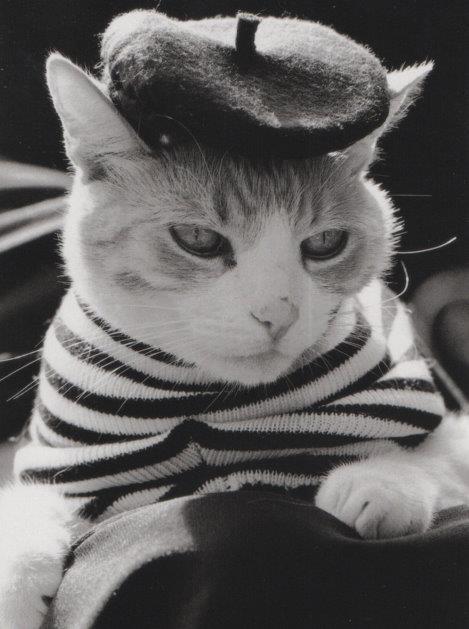Cat #112.jpg
