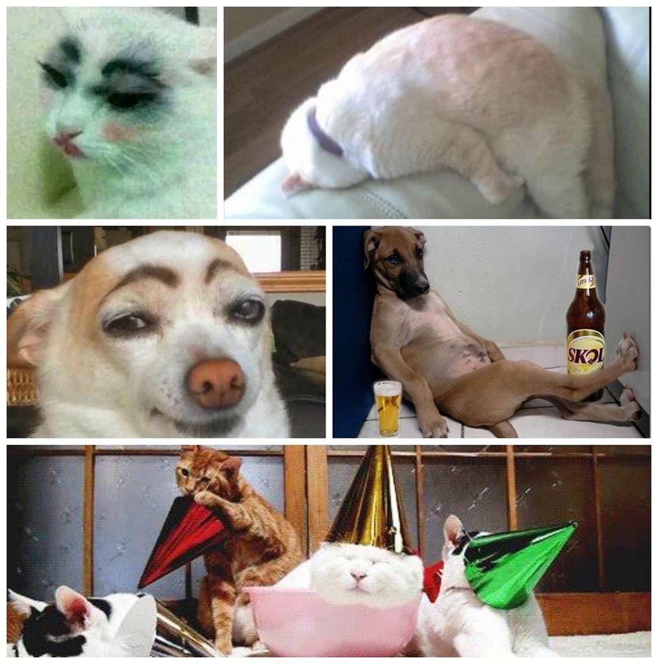 Drunk Pets (697).jpg