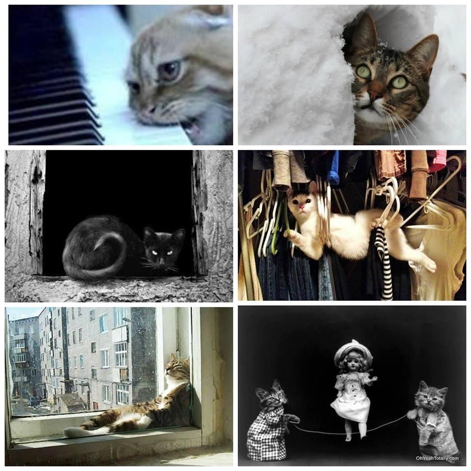 Cats Olympics #1.jpg