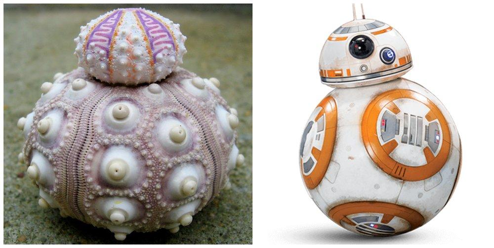 Star Wars BB-8 Collage.jpg