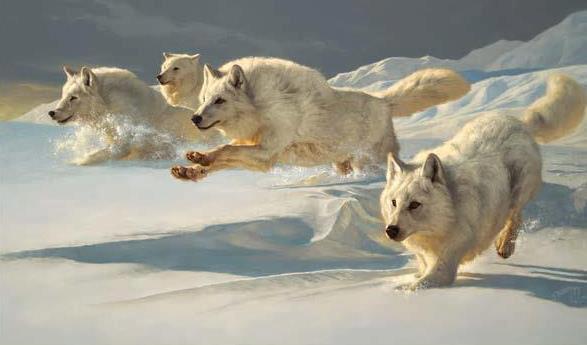 Winter wolves (703A).jpg