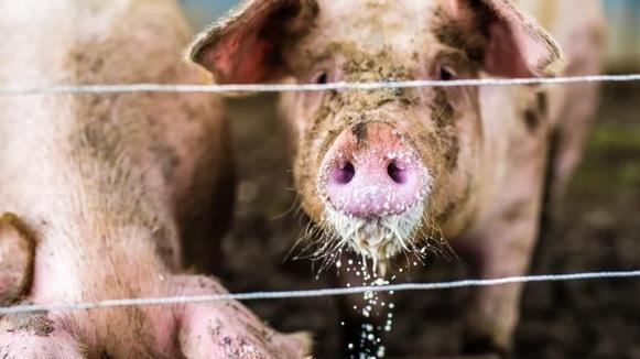 Harnessing AI to Track Factory-Farm Waste    |SCIENTIFIC AMERICAN, April 2019|