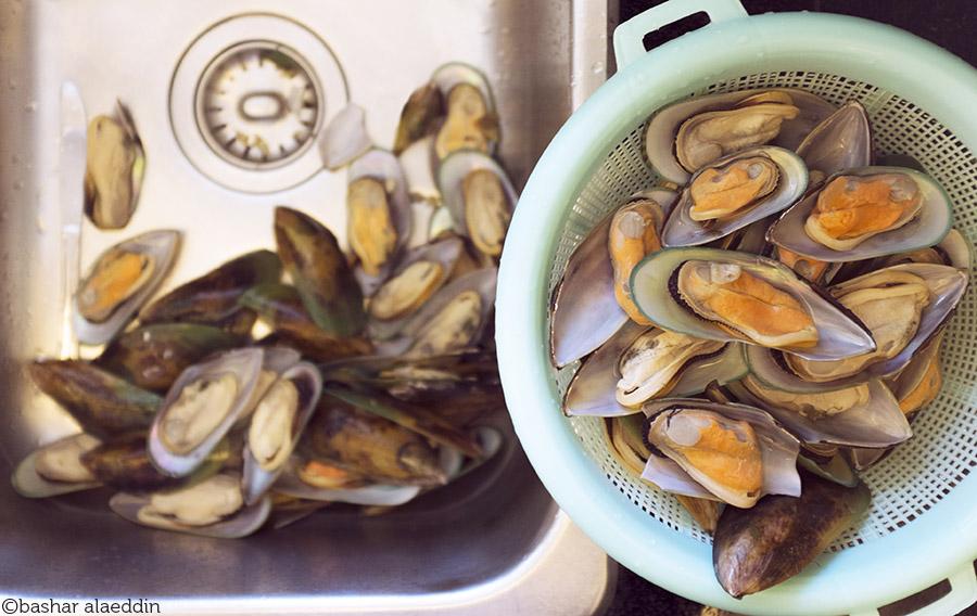 Mussels_900px_WM.jpg