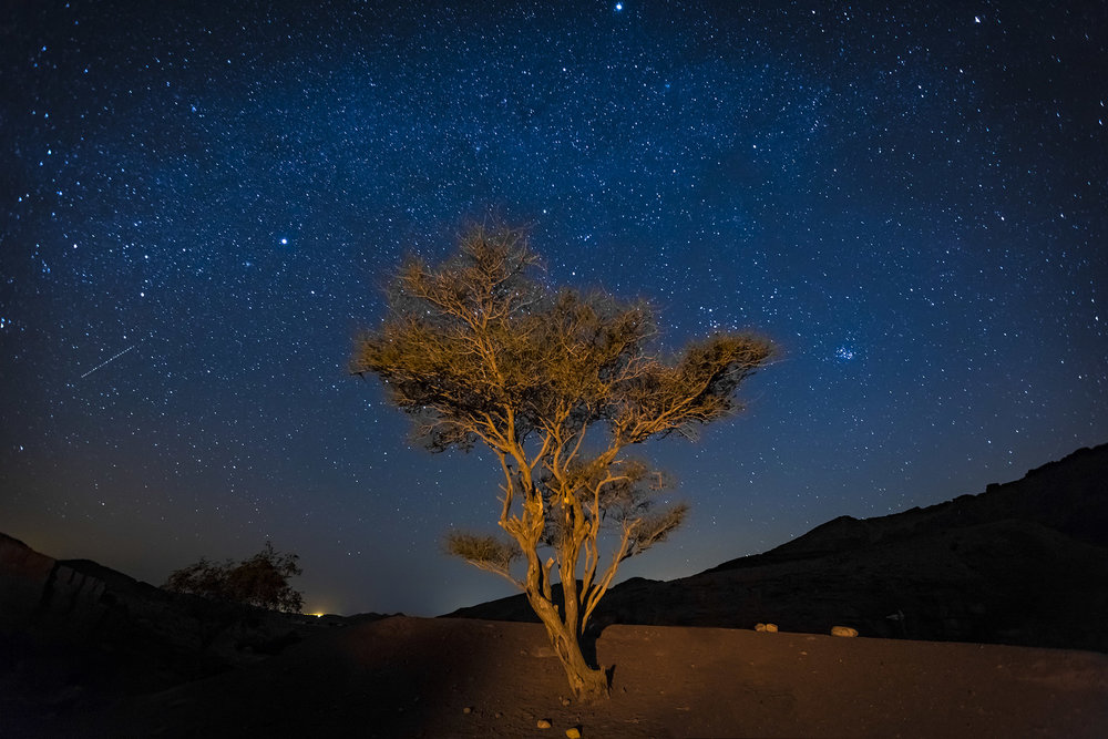 New_Feynan_TreeStars_WEB.jpg