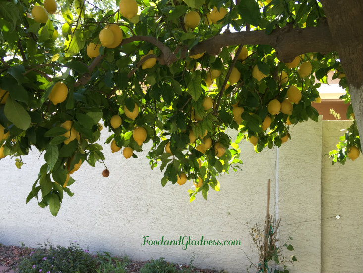Art's lemon tree food and gladness