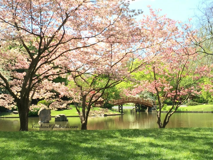 Missouri Botanical Gardens; dogwoods and bridge