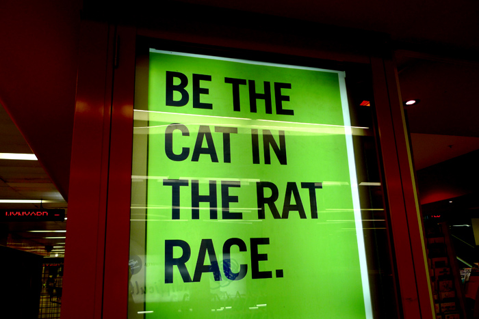 be the cat in the rat race.jpg