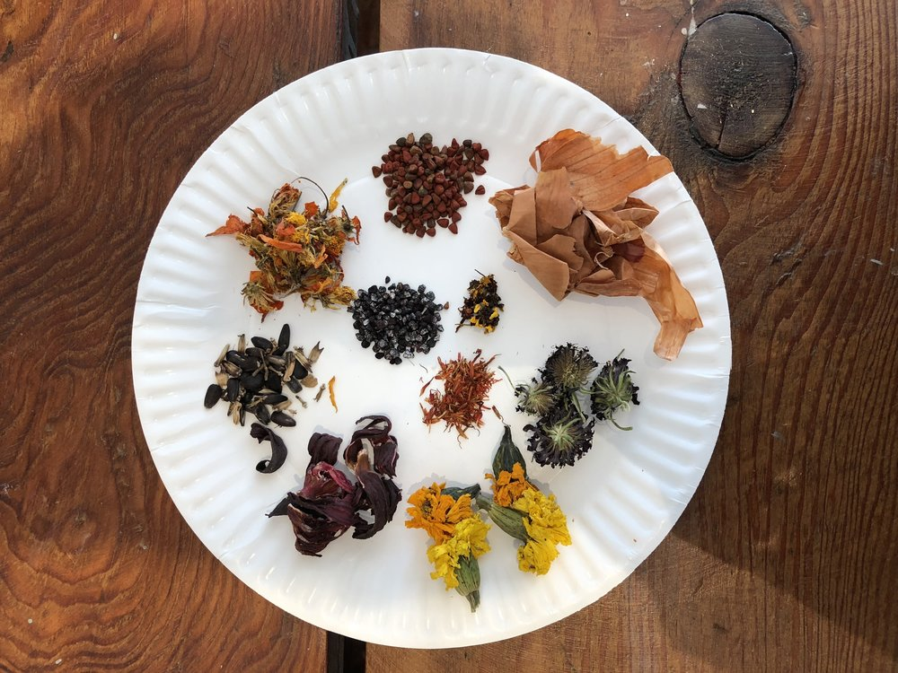 My plate of selected dried plants, flowers, and vegetables