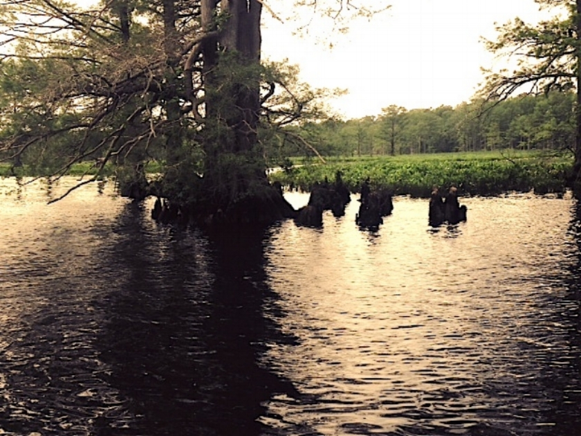 Chickahominy River Picture.JPG