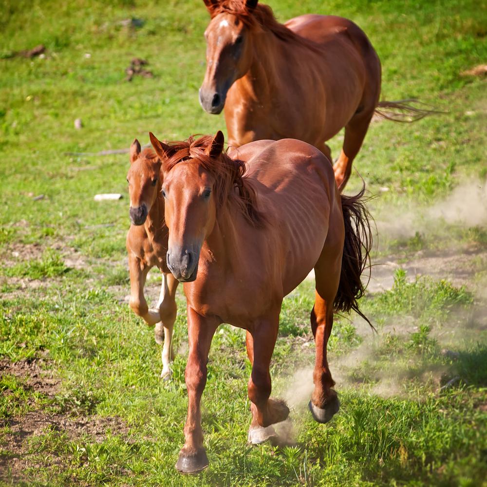 Horse Moves 7..jpg