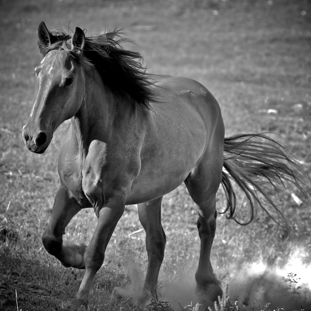 Horse Moves 5..jpg