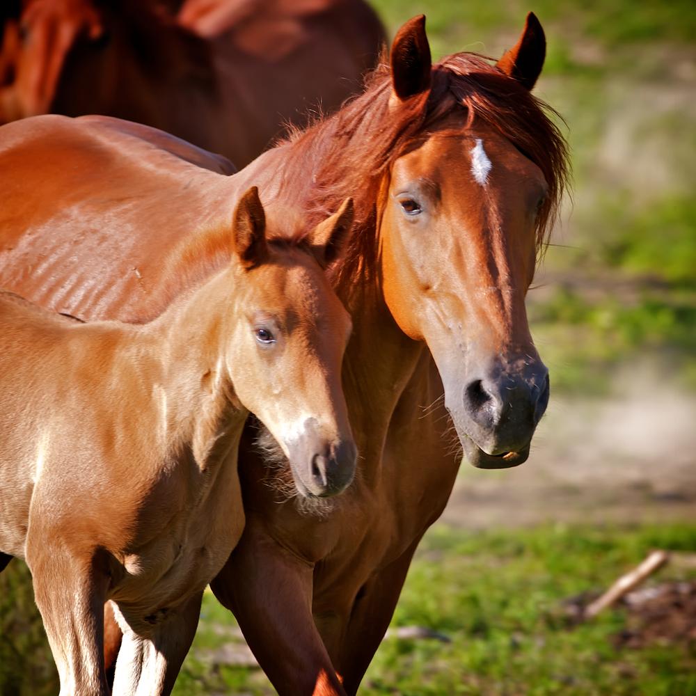 Horse Moves 4..jpg