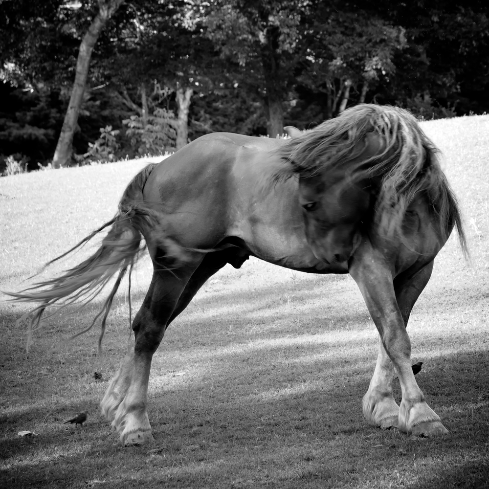 Horse Moves 2..jpg