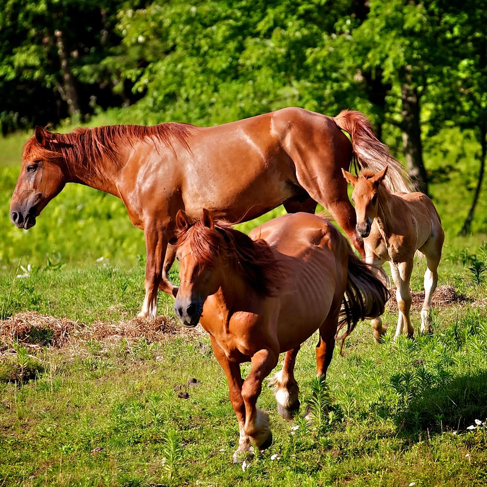 Horse Moves 1..jpg