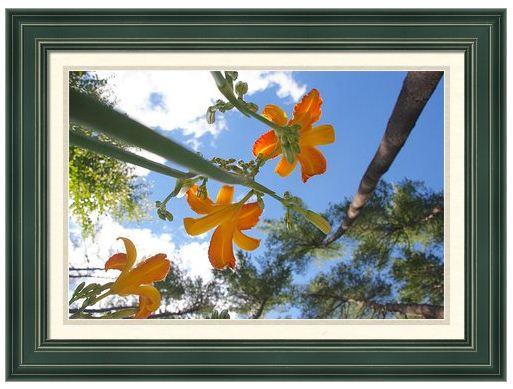 framed2.JPG