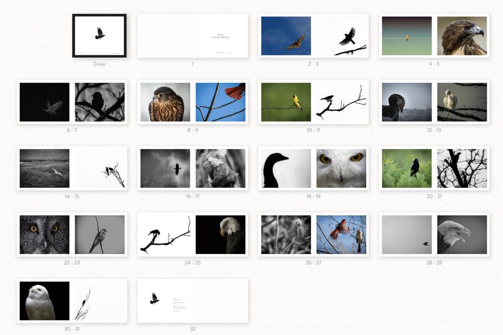 avian+book.jpg