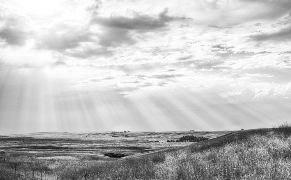 Open Grasslands & Rays: Montana 2017 (Nathan Larson Photography)