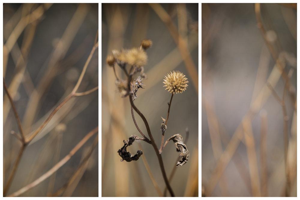 Chihuahuan Desert Triptychs