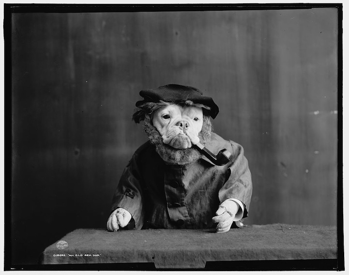 explore-blog :     We already know that Thomas Edison was  the grandaddy of cat viral videos , but did you know viral pet dress-up dates back to  1905 ?