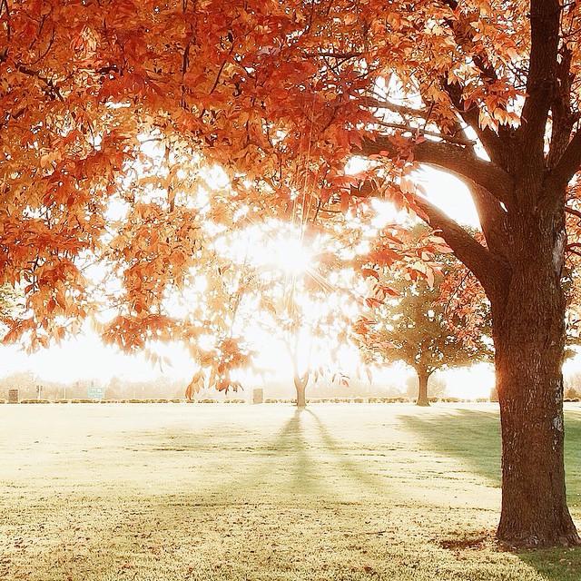 2014-10-29_1414587733.jpg