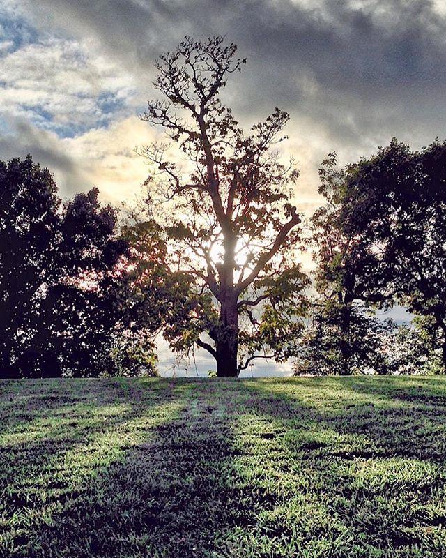 Stormy summer #solo_tree #framedbynature