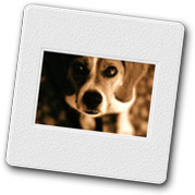 vacation-house-rental-dog-beagle-2.jpg