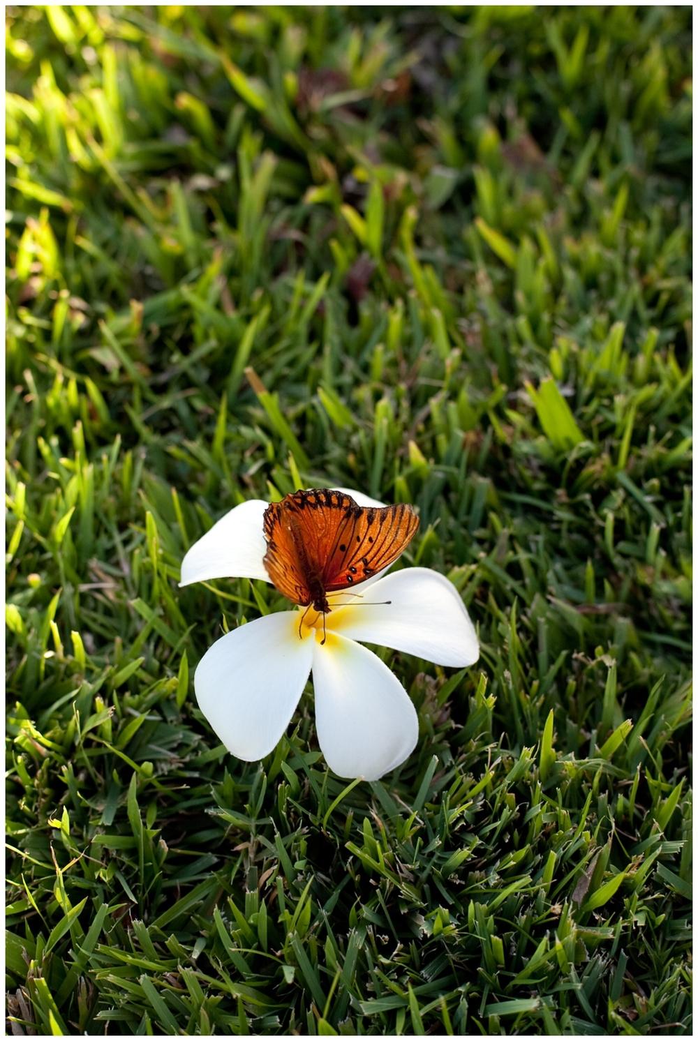 sandiegochildrenphotography_181.jpg