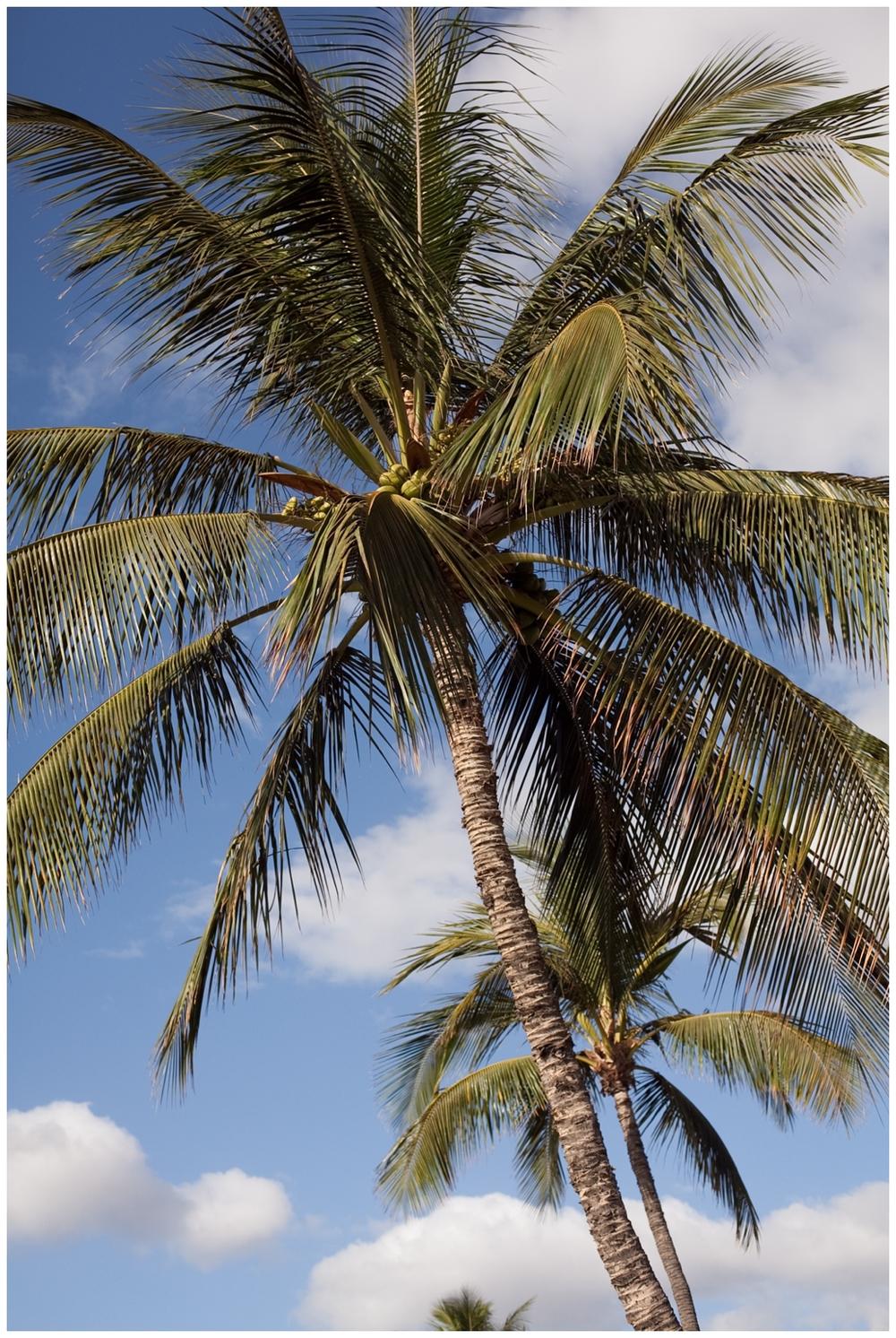 sandiegochildrenphotography_217.jpg
