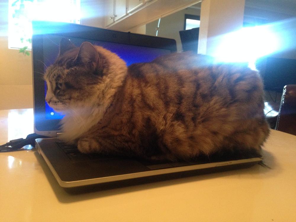 Sulu hard at work.
