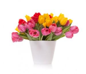 tulips-300x258.jpg