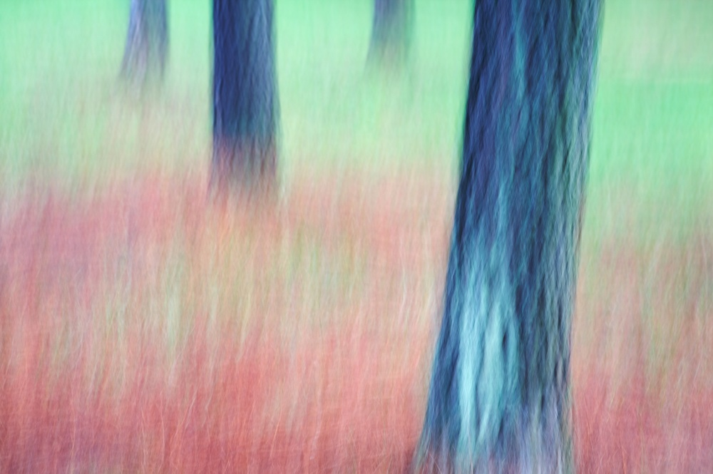 Crayon Draying of a Forrest.jpg