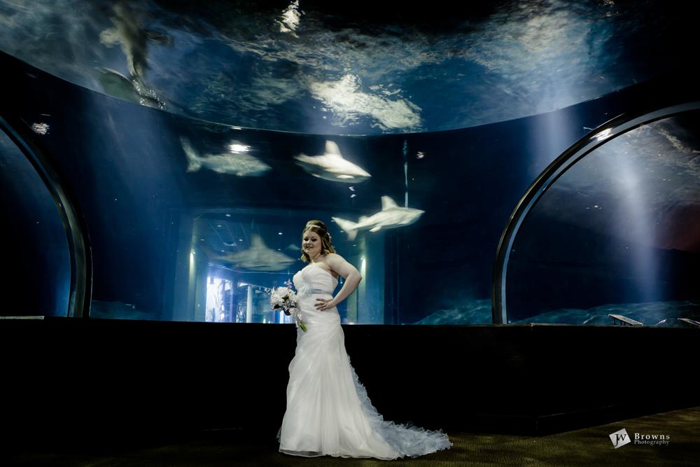 Bridal Portraits Brooke   Jenks Aquarium and Woodward Park ...