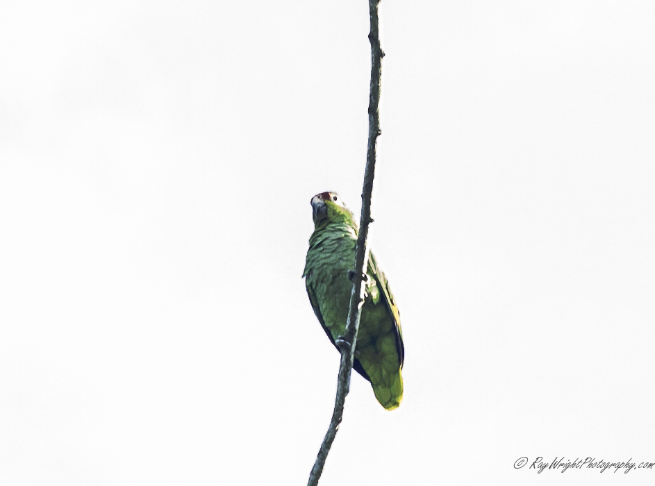 2014 Costa Rica Vacation 014.jpg