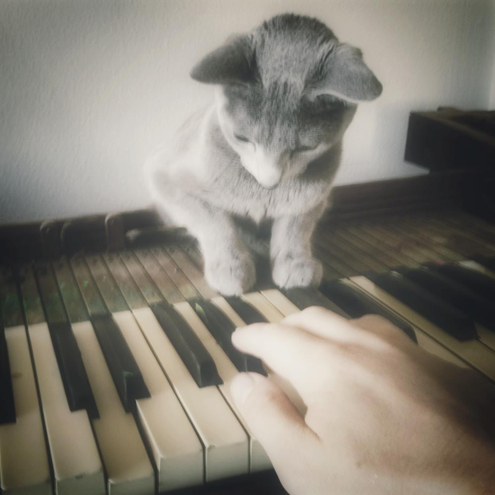 The Cat's Fugue.JPG