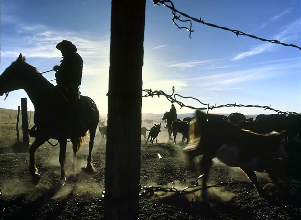montana-rancher-518310-lw.jpg