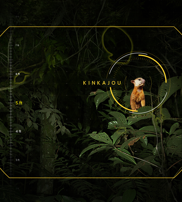 jungle_1.jpg