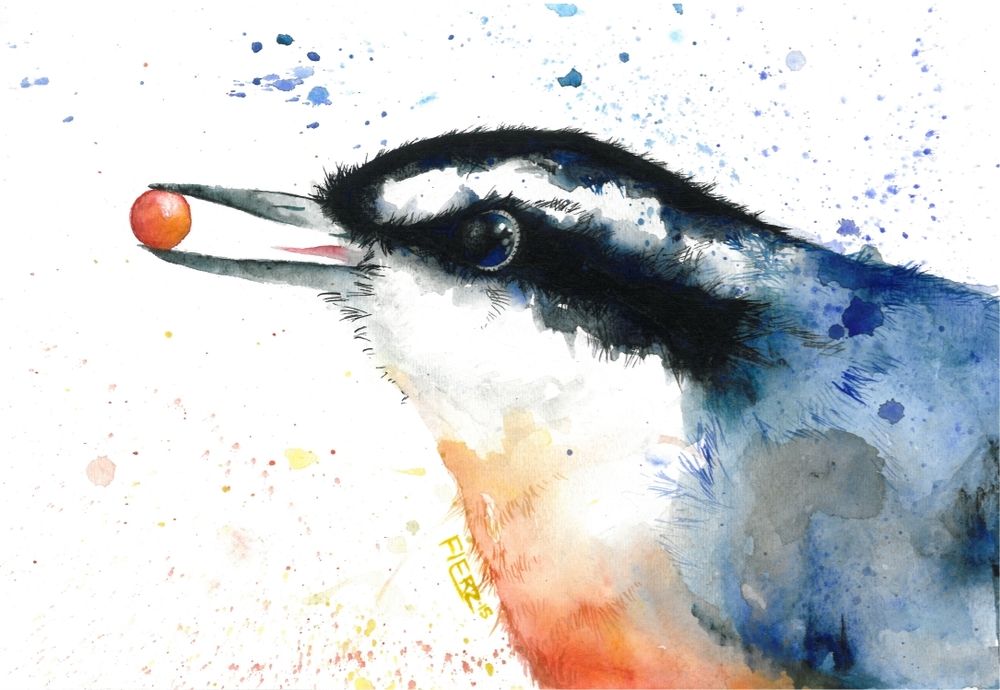 Nuthatch Fine Art Color Illo.jpg