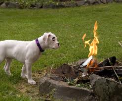dog and fire.jpg