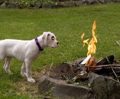 dog and fire.jpg