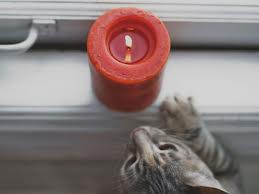 cat and candle.jpg