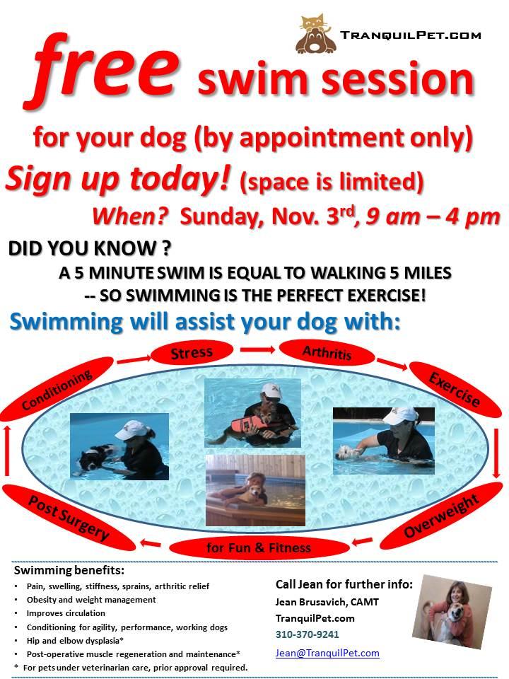 Flyer - Swim Your Dog - Open House - 2.jpg